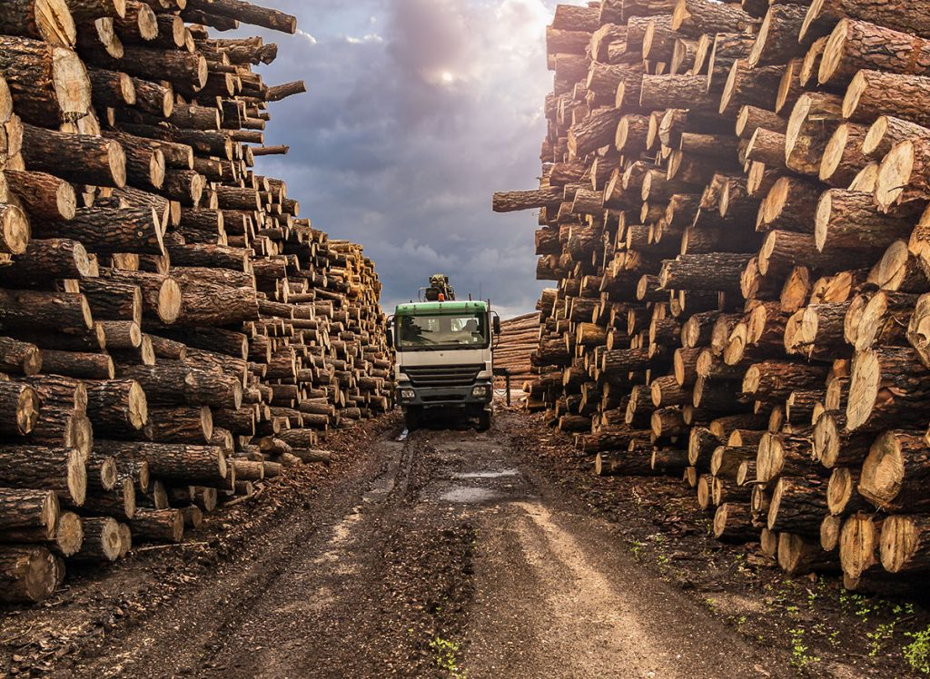 Transport of pine logs in a sawmill for processing and pellet processing
